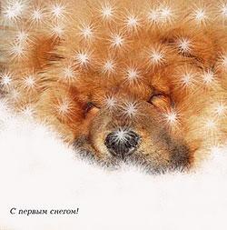 Автор: Наталья Ковтун
